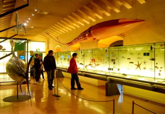 Museo de la Naturaleza y el Homb ...