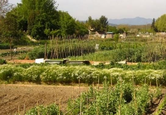 Huertas de Santa Eugènia